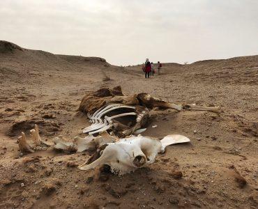 خطرات مرگ آور برای طبیعت گردان