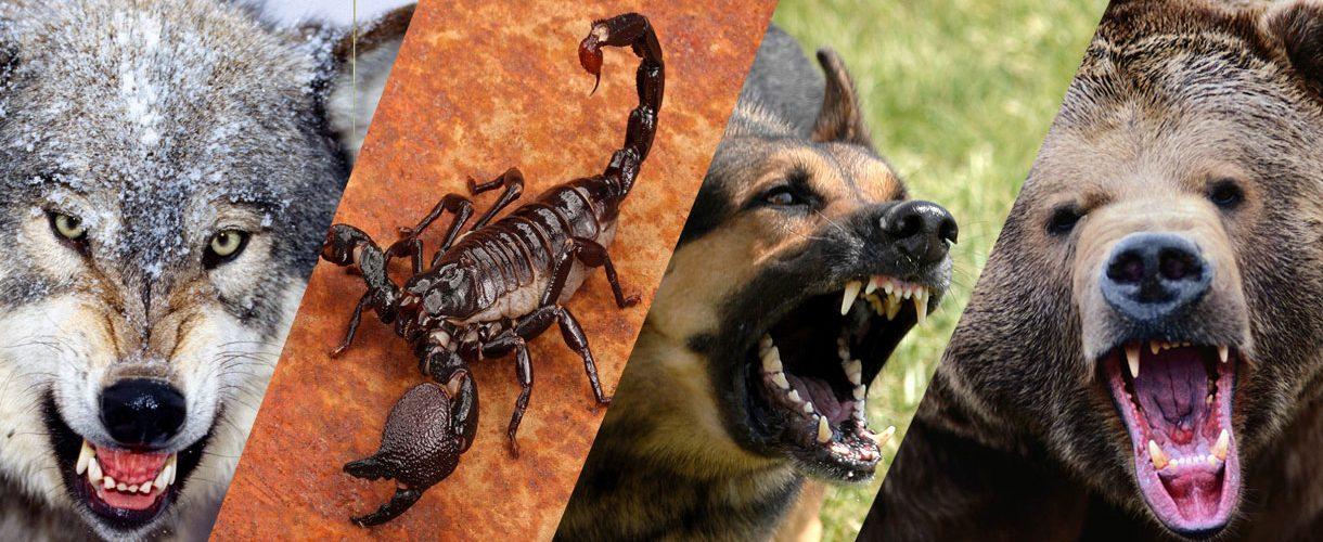 مقابله با حیوانات وحشی و گزندگان