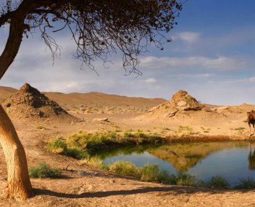 چشمه شتر