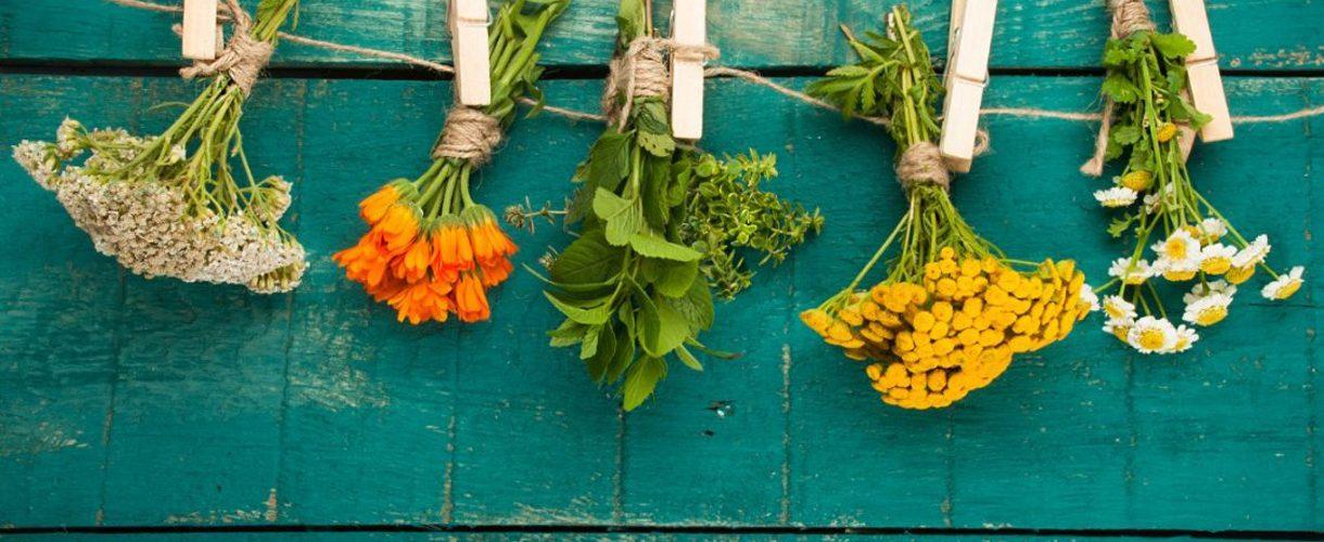 گیاهان دارویی در طبیعت گردی